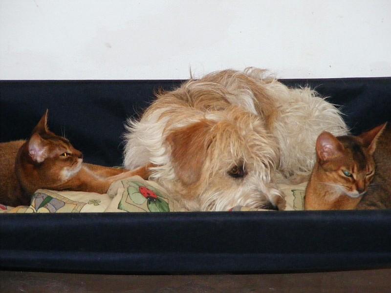 15.05.2009  Maggie, Semiramis &  Rosine im Hundebett