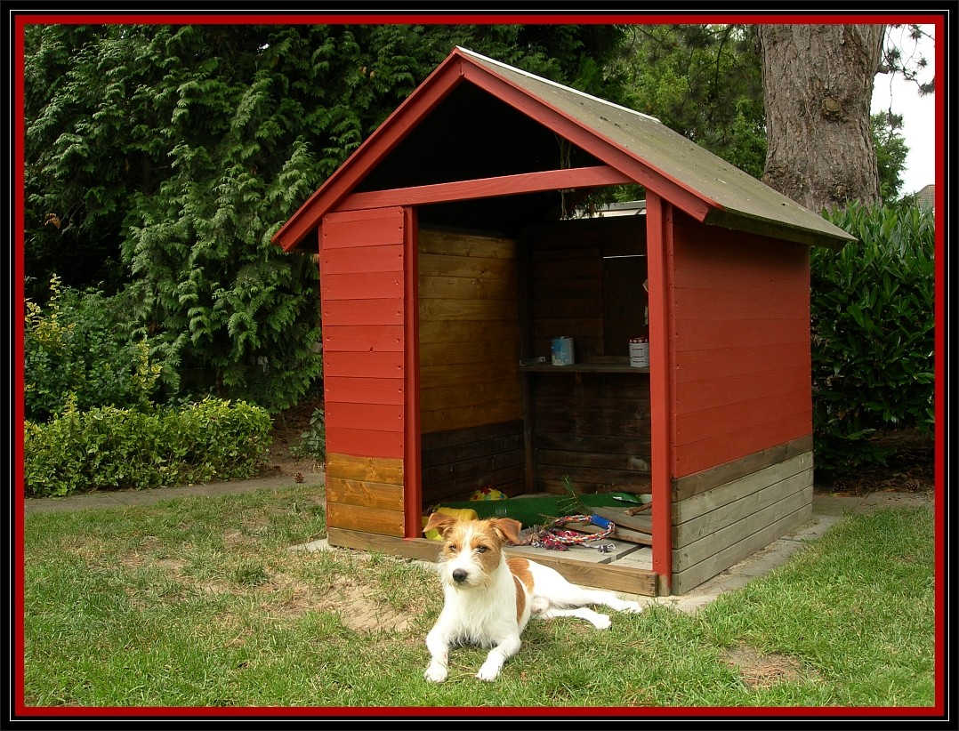 22. Juni 2012, Fritz liegt schon einmal zur Probe vor dem HundeHäuschen
