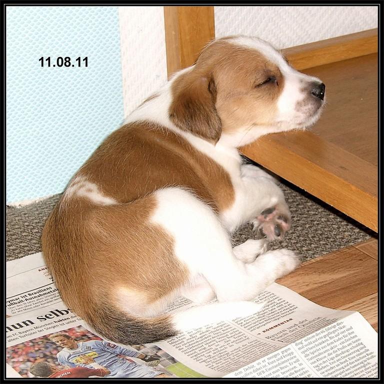 """11.08.2011 """"Ich bin beim Zeitungslesen eingeschlafen. Ein Buch von Lassie hätte ich lieber!!"""""""