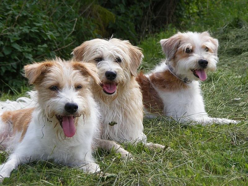 10.05.2009  Katla, Maggie & Quaste-Ronja