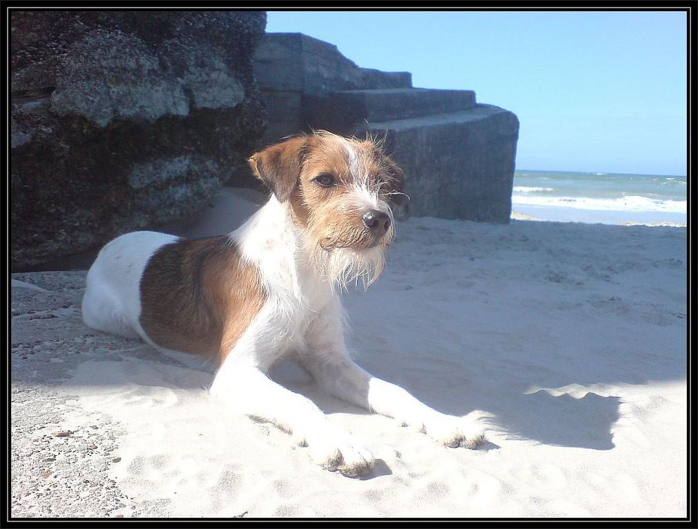 24.08.2007   Eine Strandflocke,......... ja, ....... die gibt es! ;-)