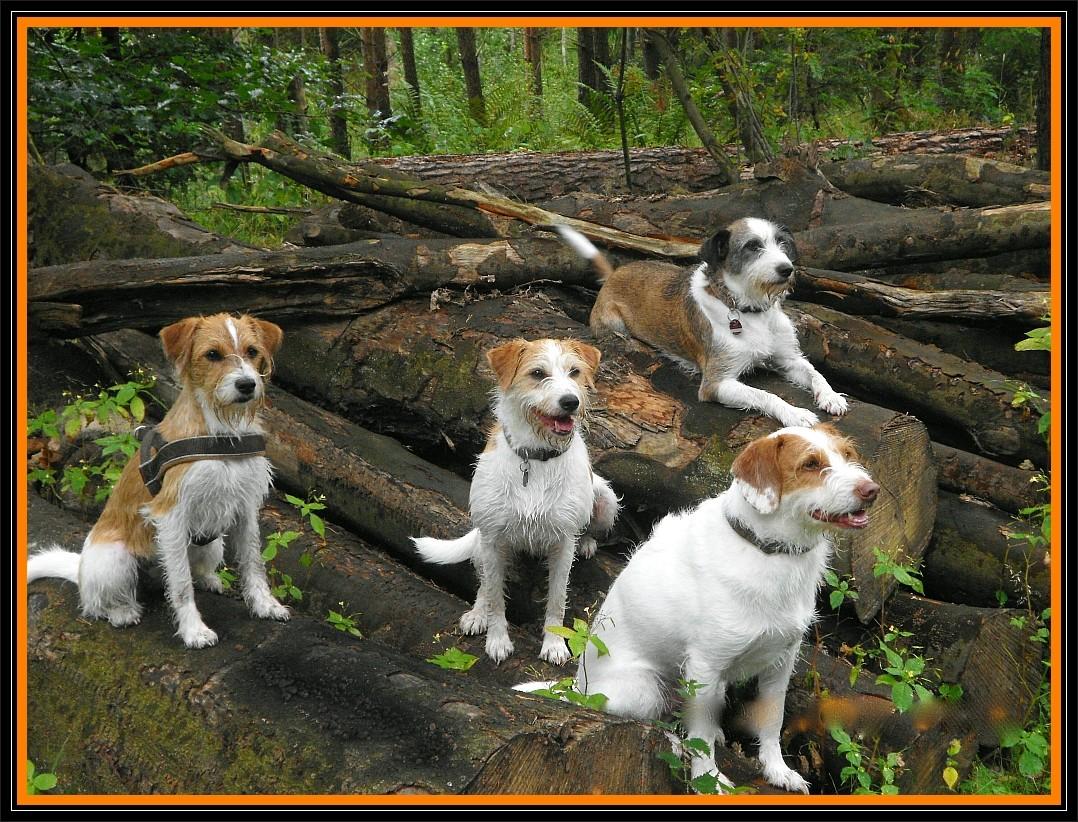 07. September 2012, Crispi, Adele, Billy & Jule im Wald