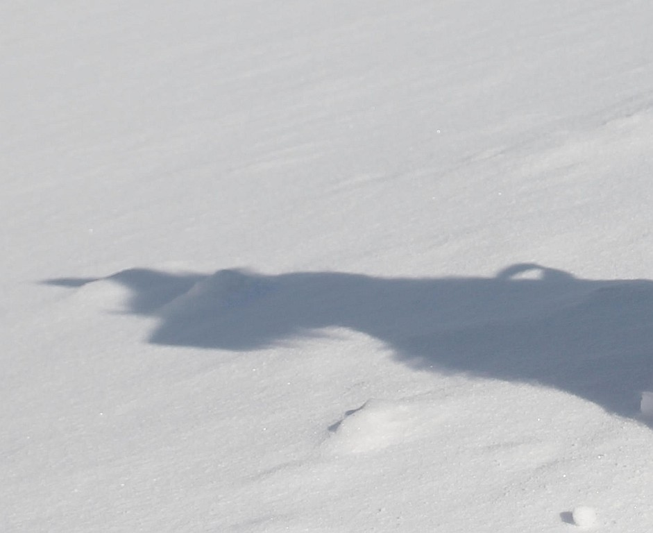 20. Februar 2012   Huch, wessen Schatten ist das denn? Kommt jetzt ein Yeti?
