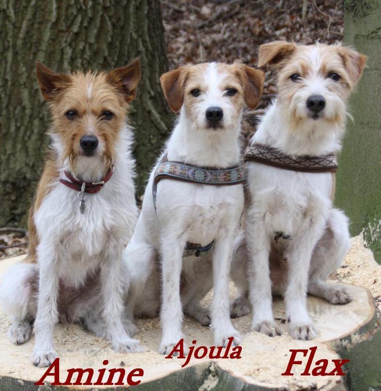 "Minchen, Ajoula & ""Opa"" Flax"