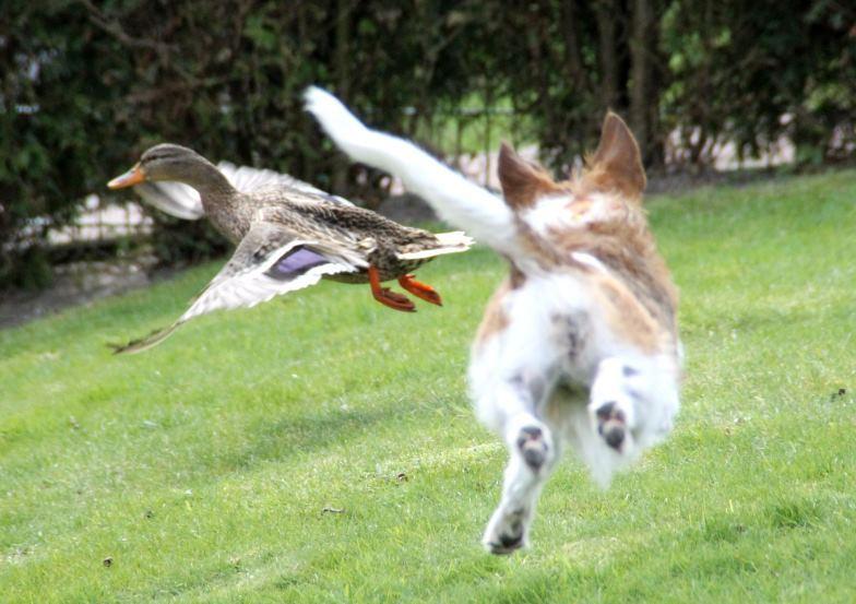 """April 2012   Flugminchen und """"Donald""""  ;-)"""