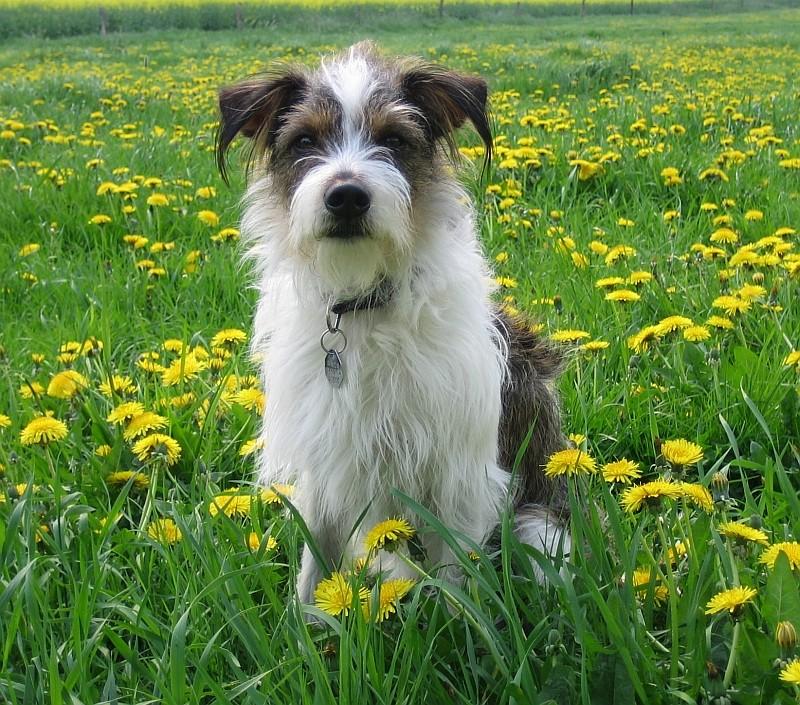 Ich liebe Sommerwiesen.