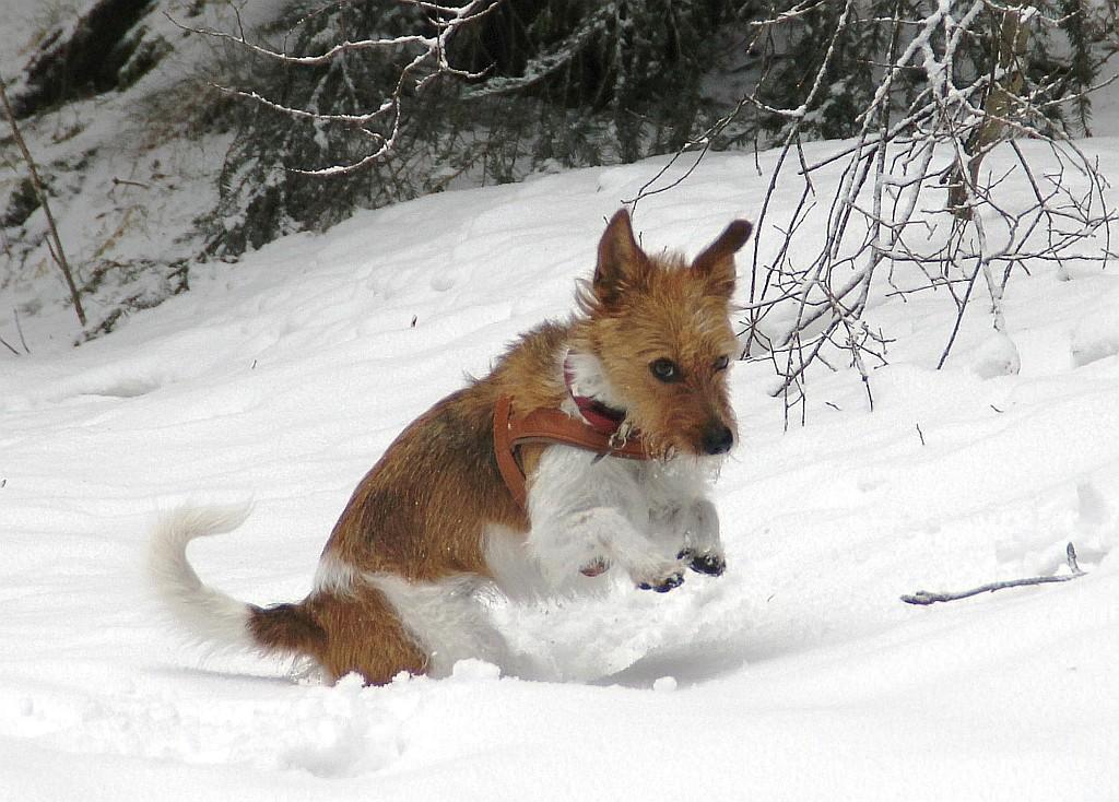19. Februar 2012  Minchen mach den Schneehasen und hoppelt über das Feld ;-)