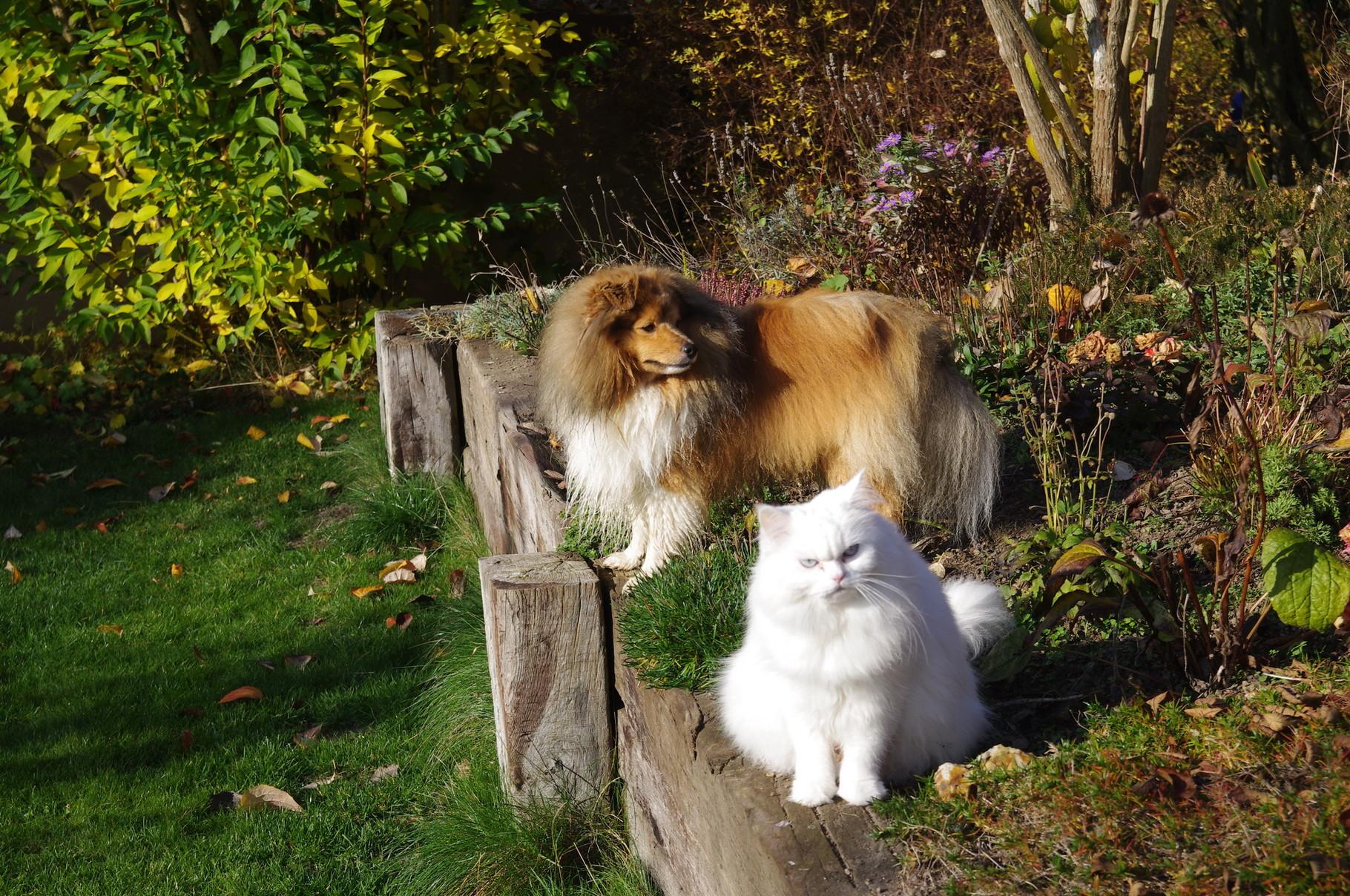 12.10.2015 -- Zwei die sich verstehen, Artus und Chloe