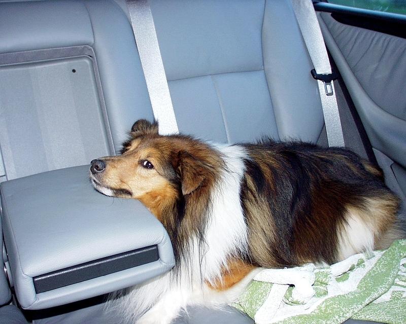 Nicki fährt Auto