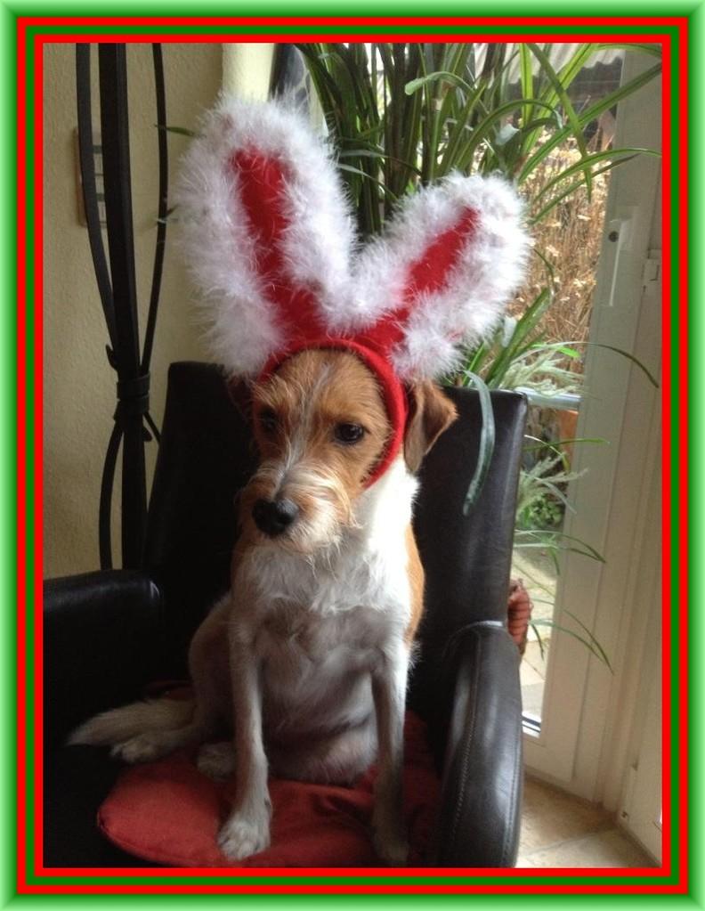 02. Dezember 2012  Flocke wünscht allen einen schönen ersten Advent  ;-)