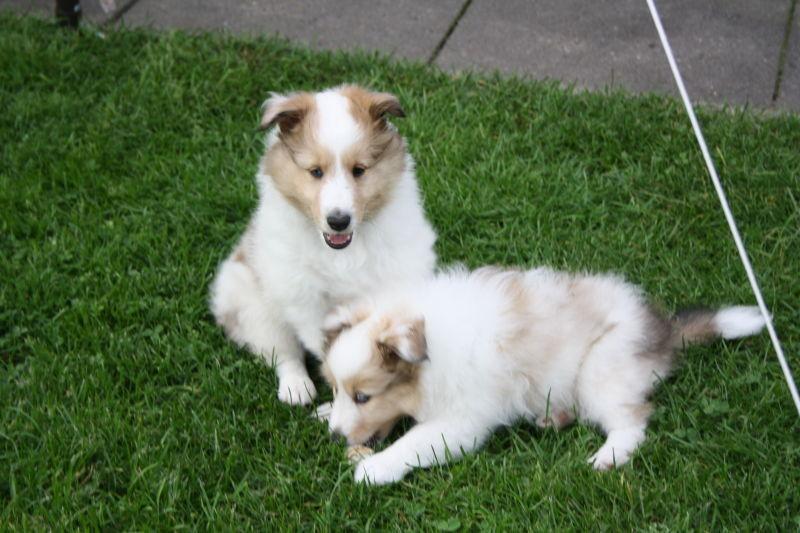 Amaretto & Schwesterchen Angel Luna, 5 Wochen