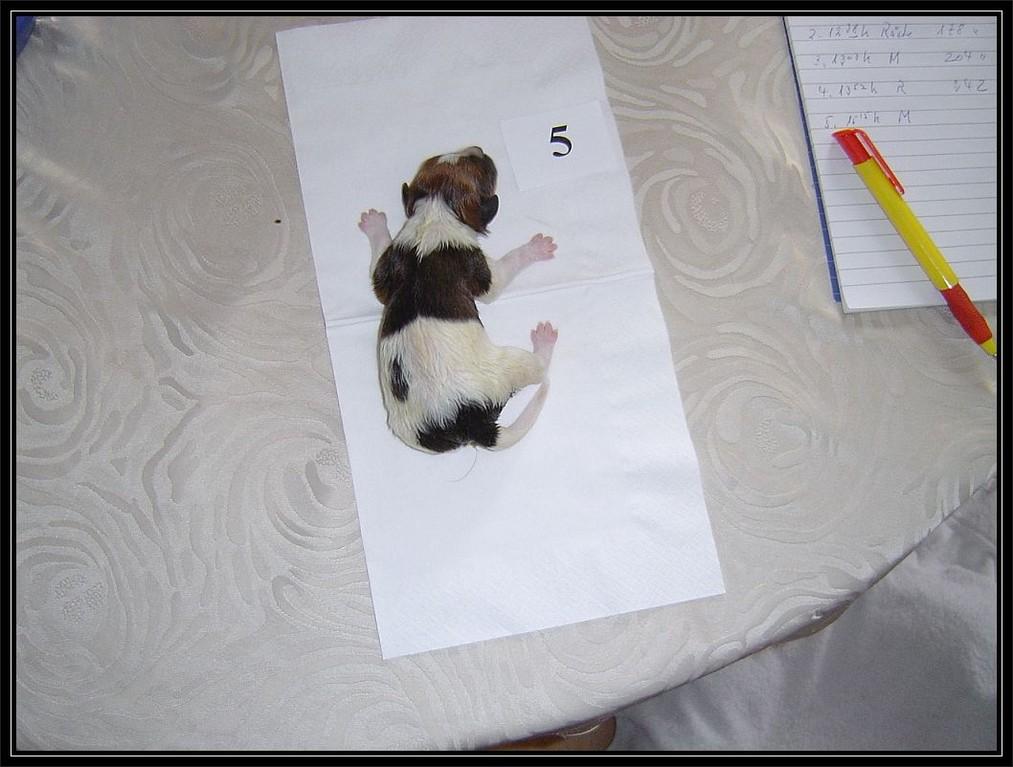 18.03.2006 Tag meiner Geburt, so sehen frische Flocken aus ;-) .... wie hieß nochmal der Film? Nummer fünf lebt.  hihihi