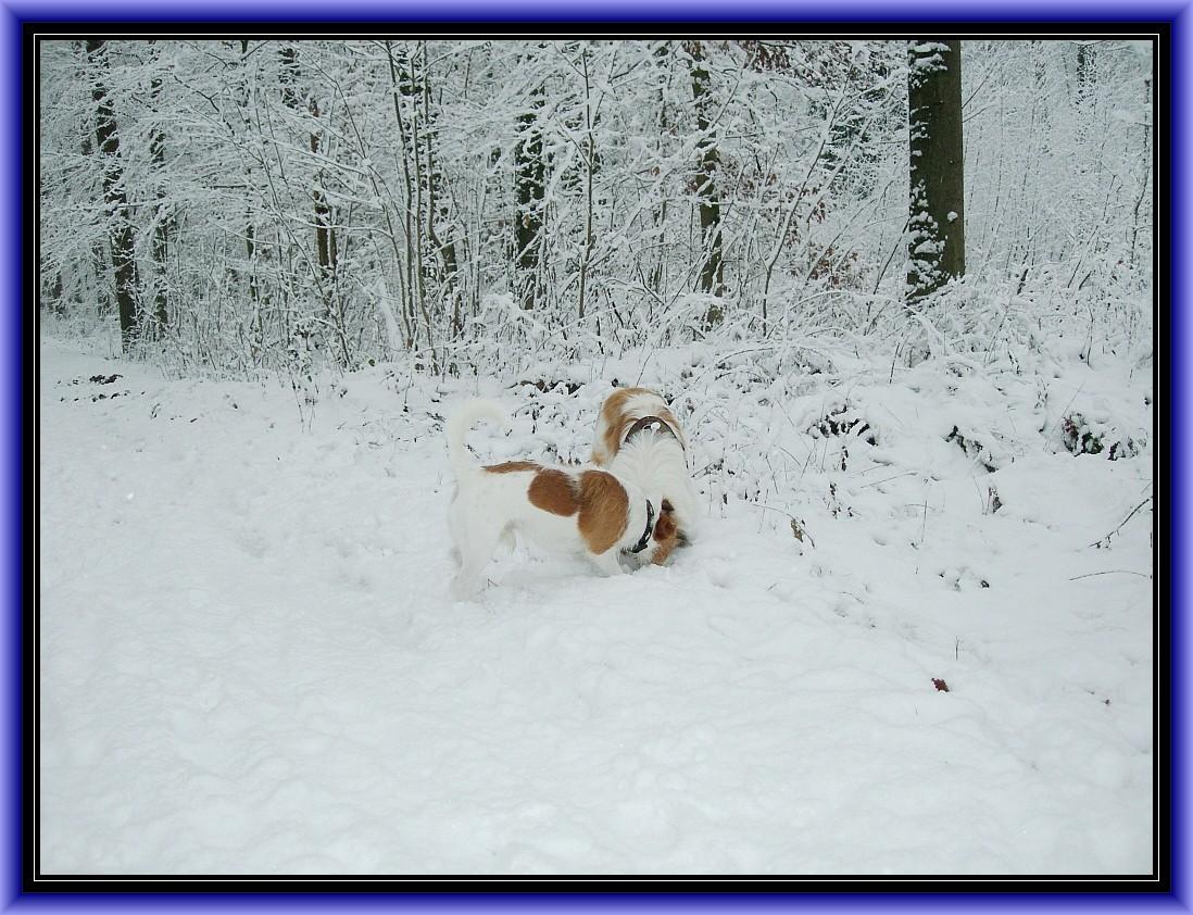 Ab ins Geisterholz, das erste Mal im Schnee....