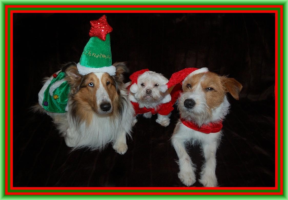 Trio infernale, hihi, mit Suzie posen für das Weihnachtsphoto