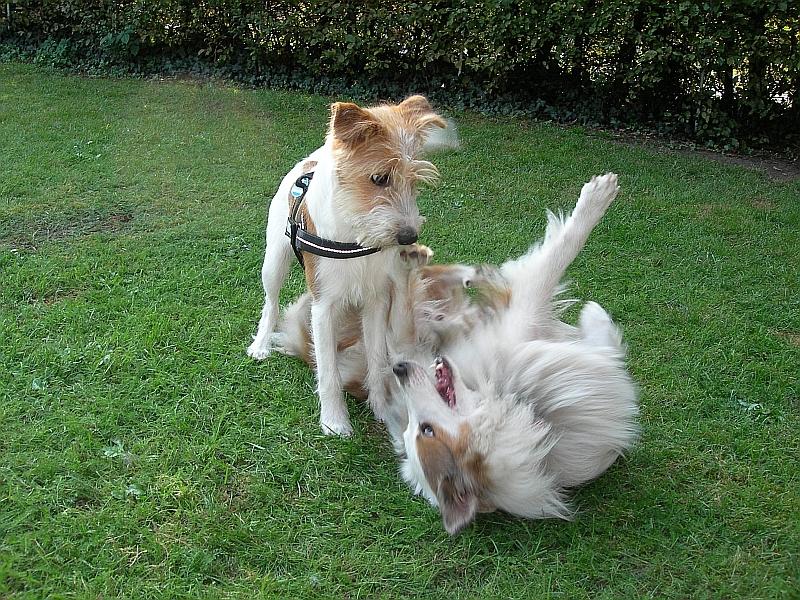 Fritz & Fenja spielen