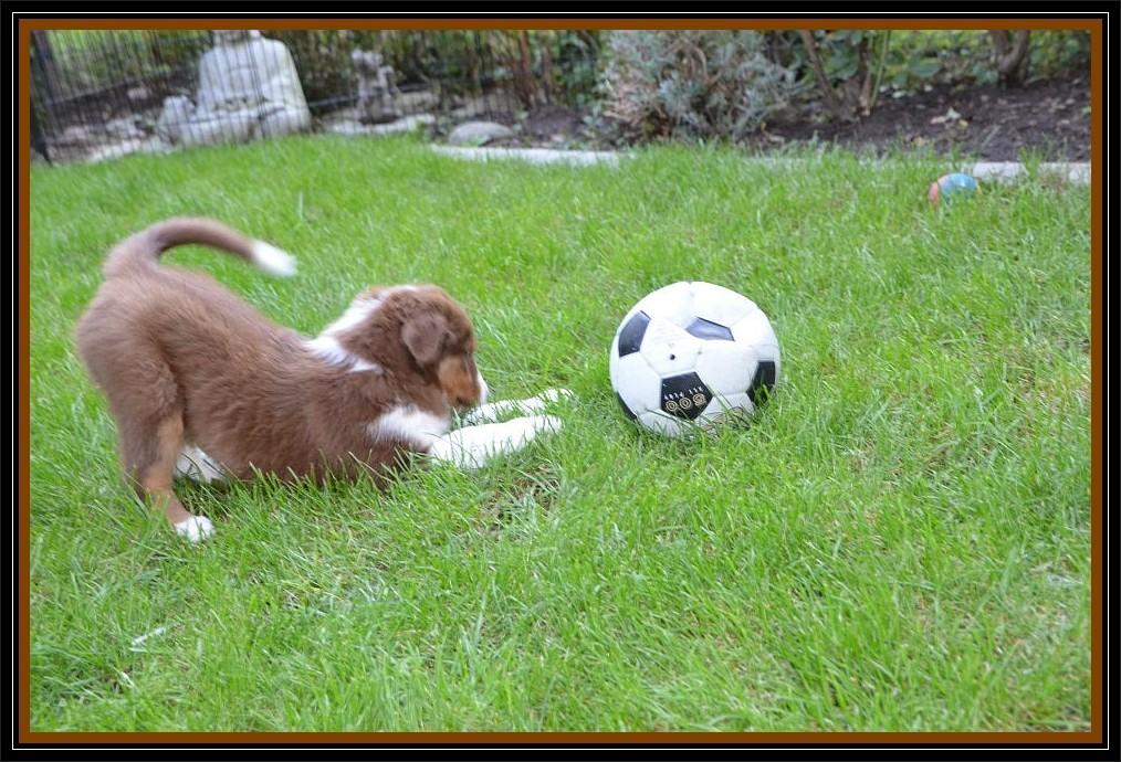 """""""Mannomannnn, der ist aber groß, der Ball."""""""