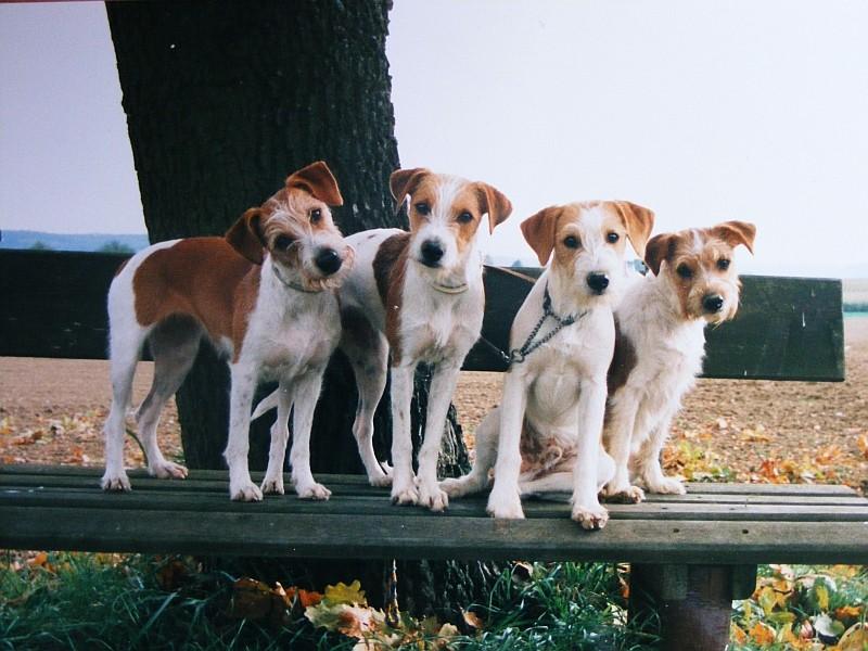 22.09.2008  Ciska, Franka, Elgin & Nauka