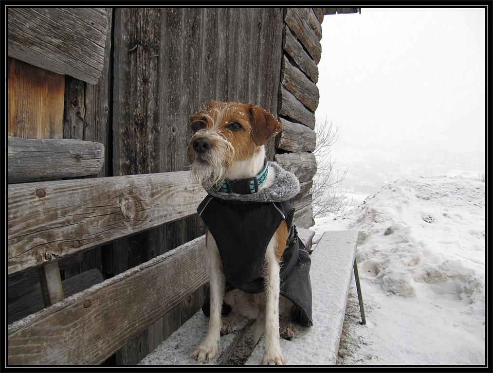 """20. Januar 2012  """"Brrrr, kalt! Aber schön ist es trotzdem gewesen."""""""