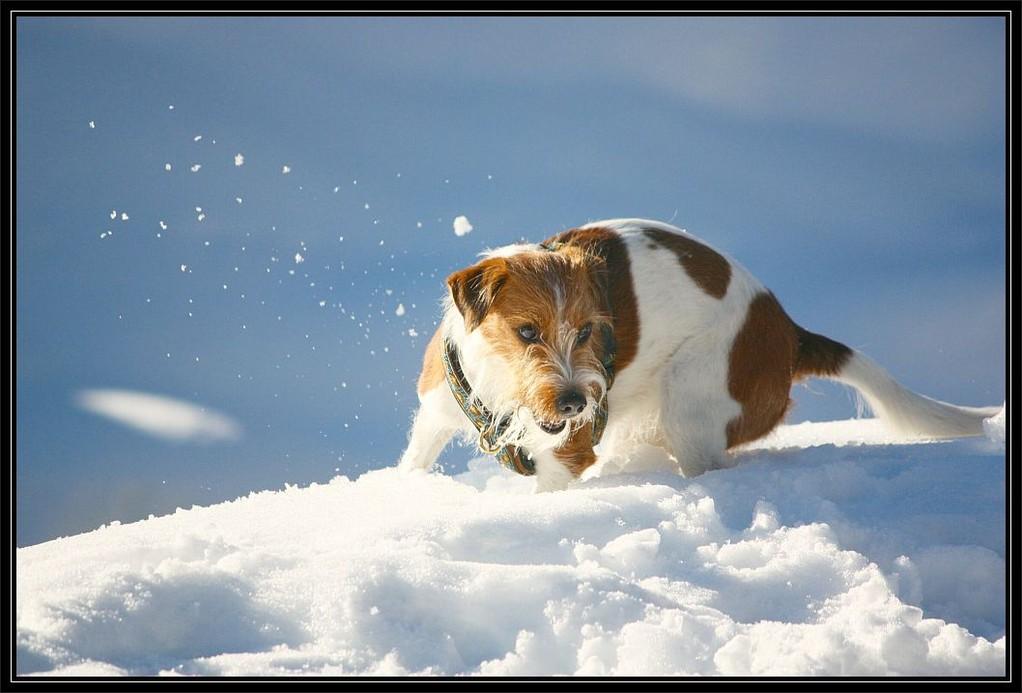 2012 im Winter   Ich, der Schnee-Kromi, dynamisch und elegant, hihihi ;-)