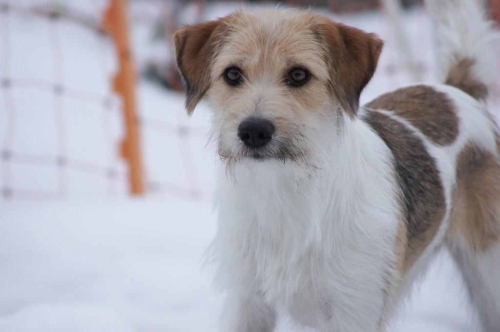 """17.02.2012  """"Schnee ist schööönn."""""""