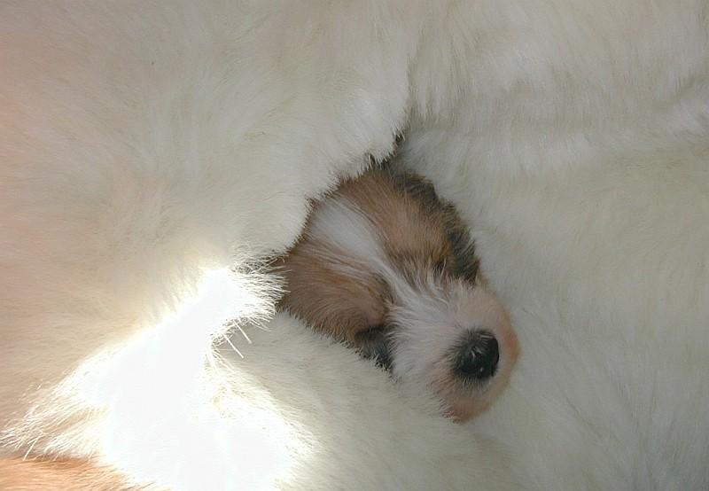 06.02.2005  R-Welpe schläft im Teddy ;-)