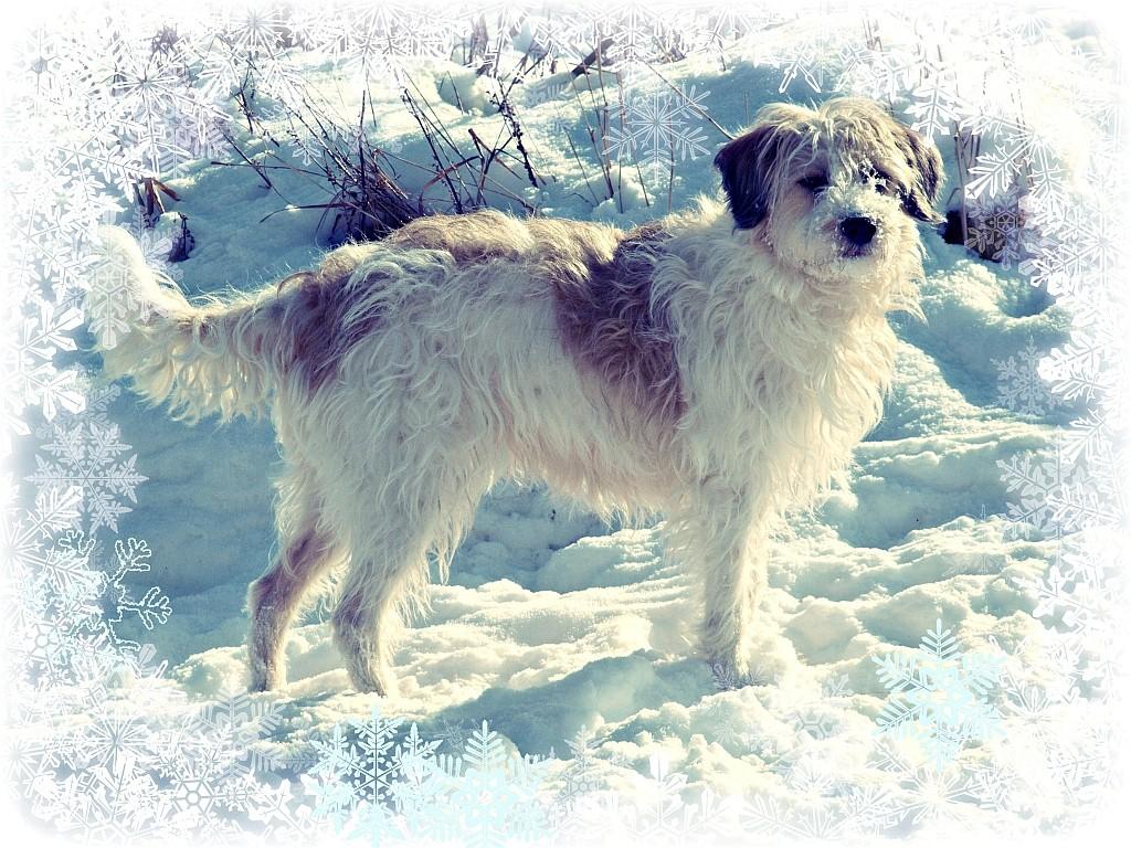 12.02.2012  Maggie im Schnee