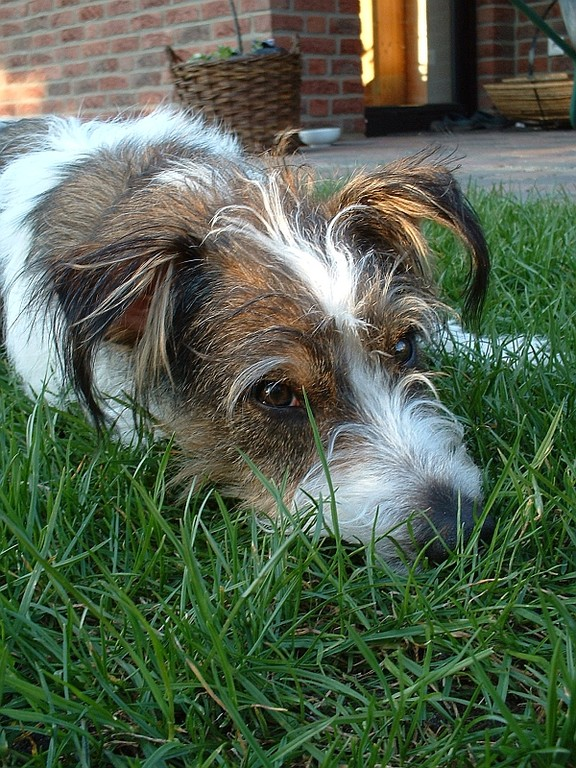 Nase im Gras, Käfer wo bist Du?  ;-)