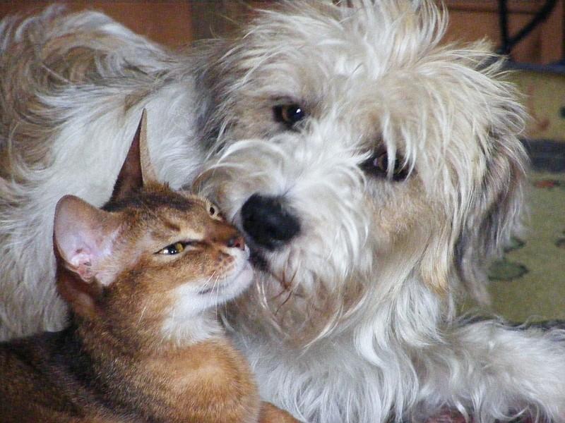 10.07.2009  Maggie & Rosine