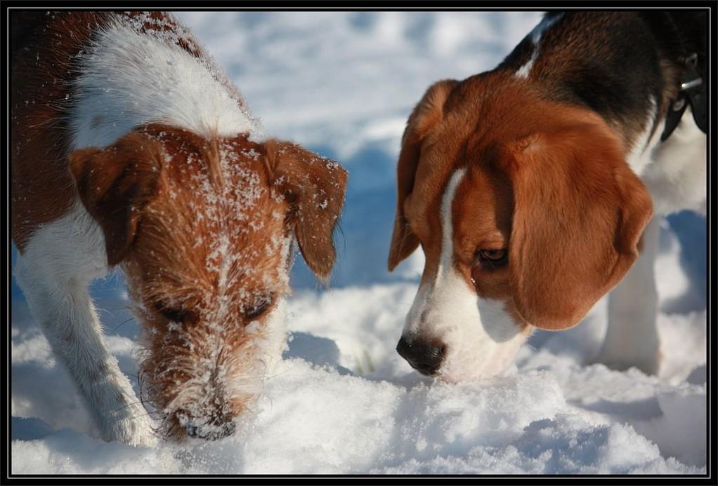 14.02.2009  Mit Kumpel Amadeus im Schnee