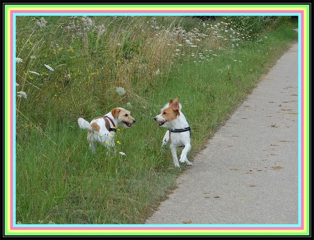 """Fritz: """"Hey Mädel, solln wir in die Büsche?"""" ---  """"Zieh Leine, Kleiner!"""""""