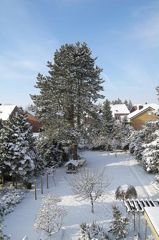 "Der ""Hundegarten""  im Winter"