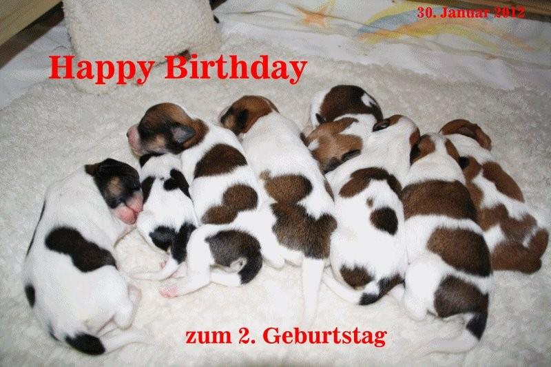 30. Januar 2012   Flawenjupé's A-Wurf hat Geburtstag, alles Gute zum 2.  ;-)