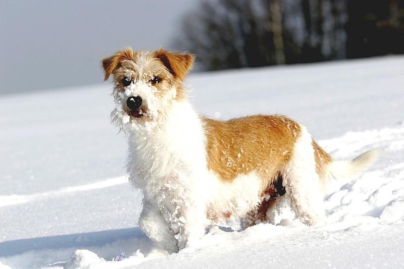 24.02.2005  Katla im Schnee