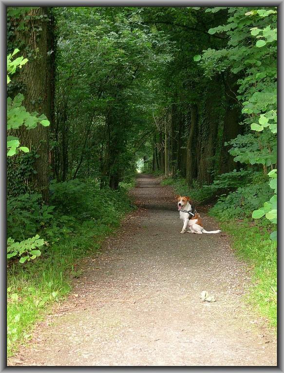 30. Juni 2012      im Geisterholz. Fritz, bestellt, aber nicht abgeholt. ;-)