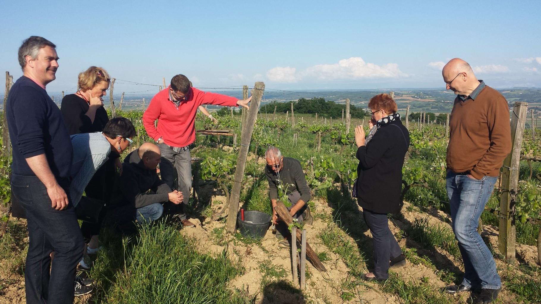 Codéveloppement avec la Nature, en soirée : Visite chez un vigneron de Saint Joseph en biodynamie