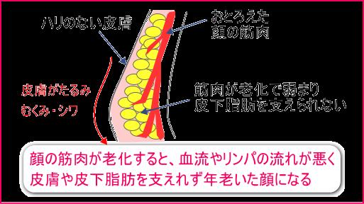 2重アゴや皮膚のたるみ・むくみは、顔の筋肉の衰えからきます。顔の筋肉がおとろえると、血流やリンパの流れが悪くなり皮膚がたるみ、むくみやシワの原因になります。