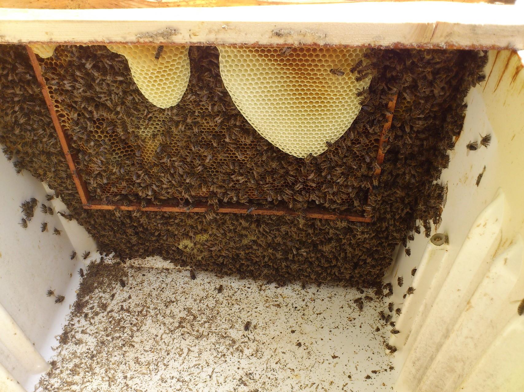 včelstvo v ledové komoře