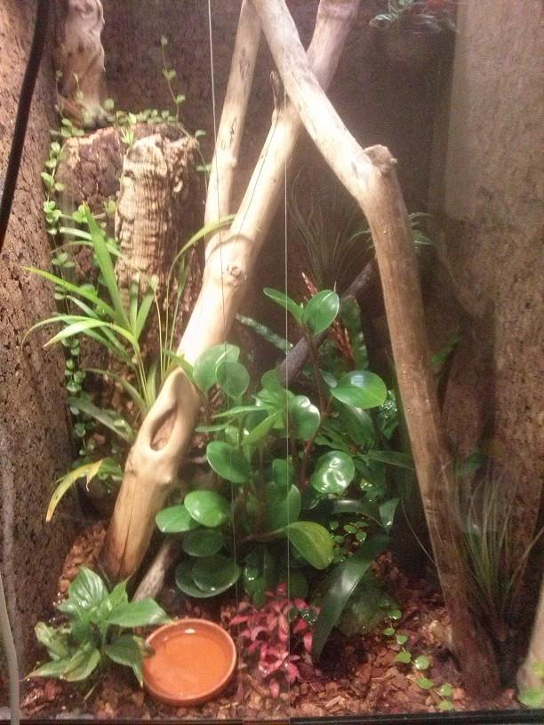 Terrarium Rotkehlanolis