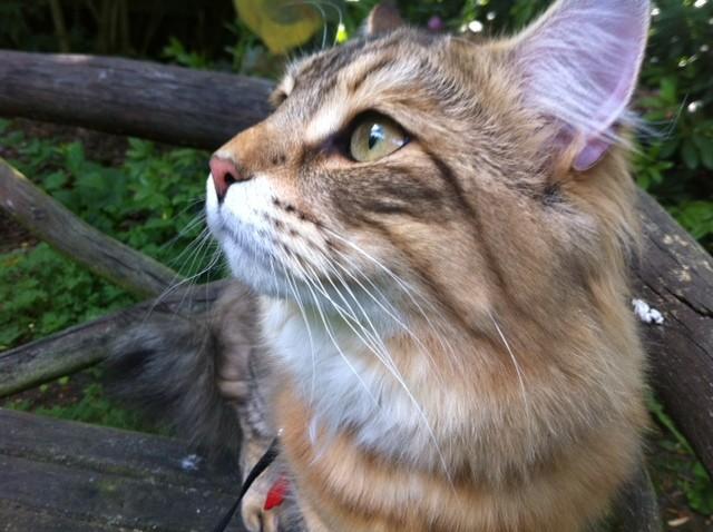 Apollo (5) neugierig (*07.07.2012)