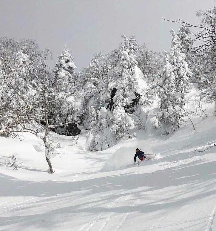 タイトなエゾ松を抜け出すと待っていたオープン 旭岳3月