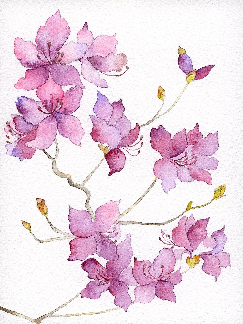 MIYAKO  PLATZ    No.11 「春の朝」