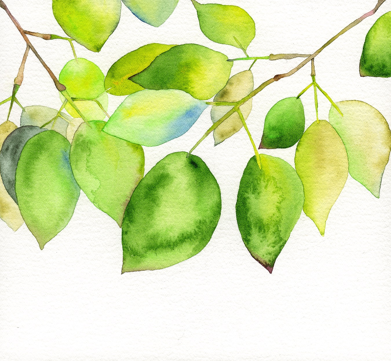 MIYAKO  PLATZ    No.12 「新緑の季節」