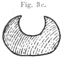 Querschnitt durch einen tonganischen Bogen.