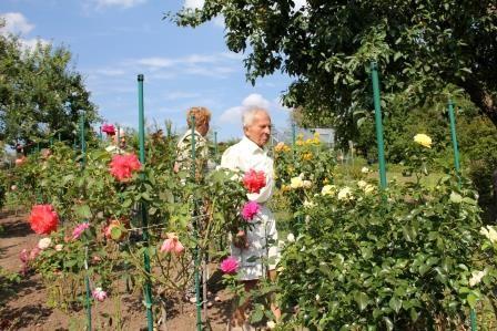 Rosenfreund Sebastian inmitten seiner Rosen
