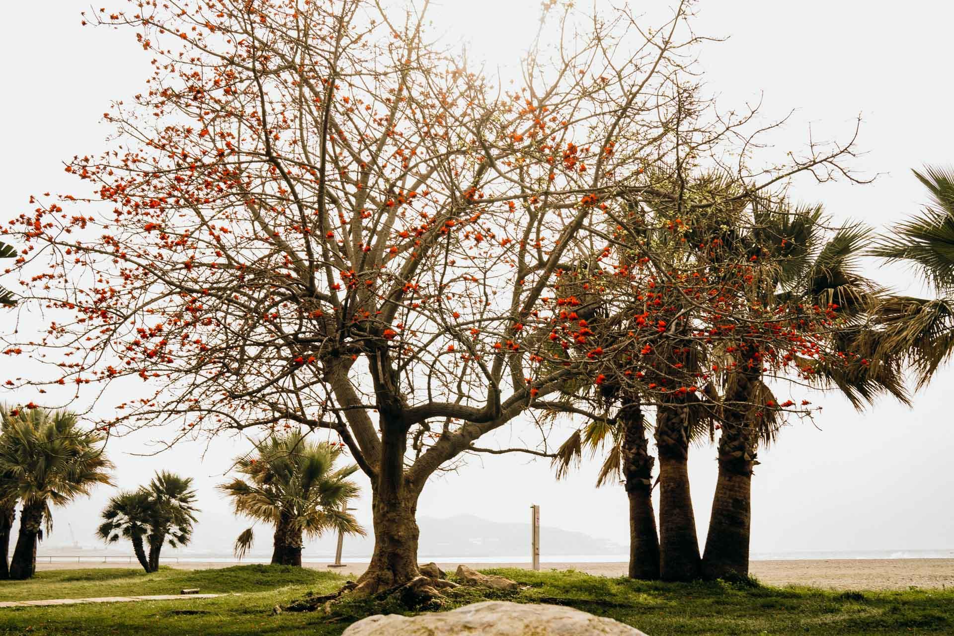 Spanien Baum