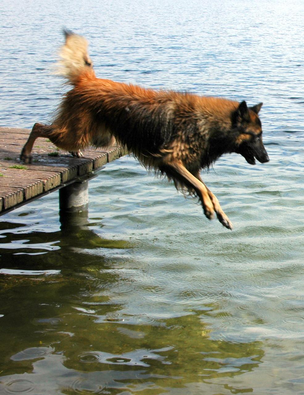 Newton beim Dog Diving