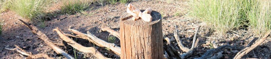 Kraftplatz mit Holz und Steinen in der Natur