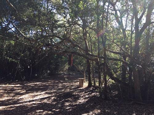 南アフリカ プラットボス フォーレストキャンプ