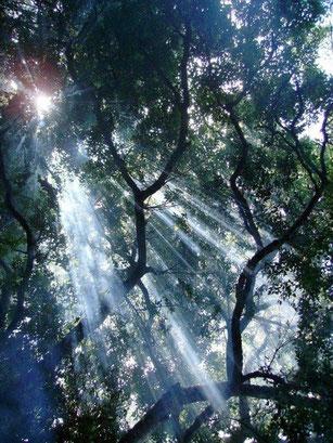 南アフリカ プラットボスの木漏れ日