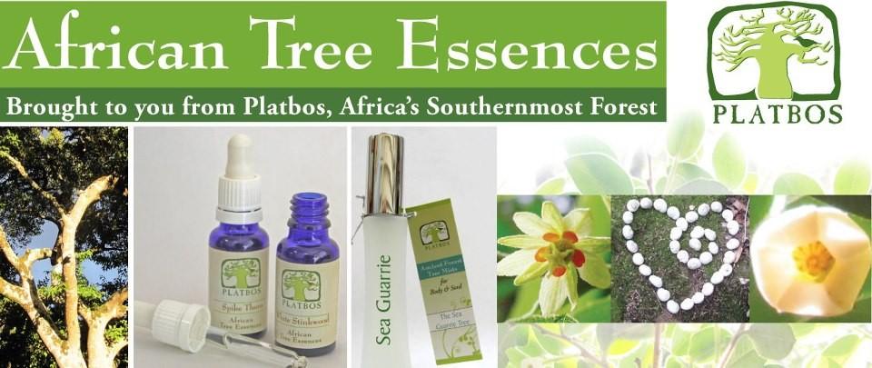 南アフリカ太古の森のフラワーエッセンス「アフリカンツリーエッセンス」
